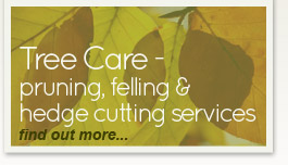 Tree Care Services - find out more