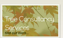 Tree Consultancy Services - find out more